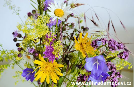 Bunch of summer flowers