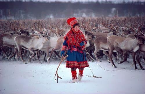 El pueblo lapón o saami habita en Laponia, una región que se extiende por el norte de Noruega, Suecia, Finlandia y la península de Kola, al noroeste de Rusia. Son aproximadamente unas 82 000 personas. No existen estadísticas oficiales de su población, pero se estima que viven unos 50 000 en Noruega, 20 000 en Suecia, 10 000 en Finlandia y 2000 en Rusia.