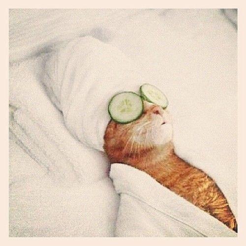 :: chill cat ::