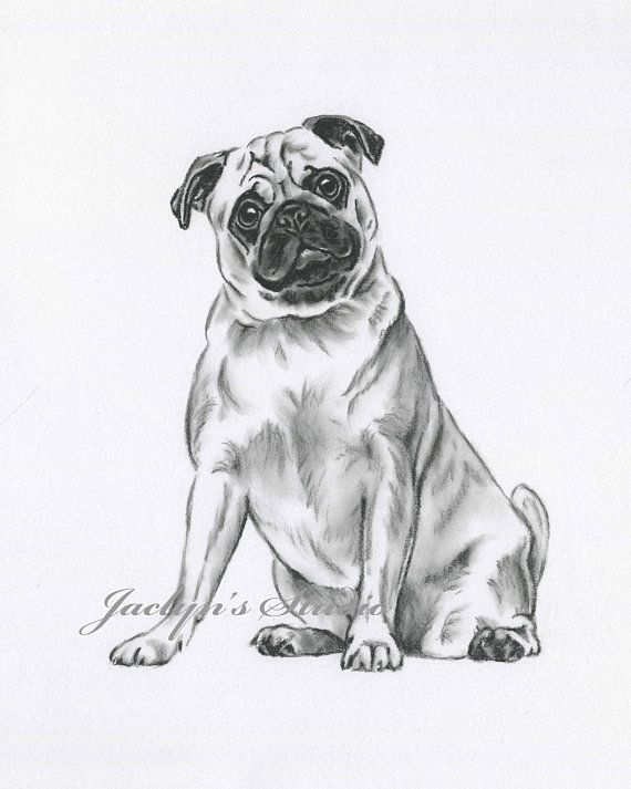 Pug Art Pug Drawing 8 X10 Giclee Print Pug Sketch Dog Art