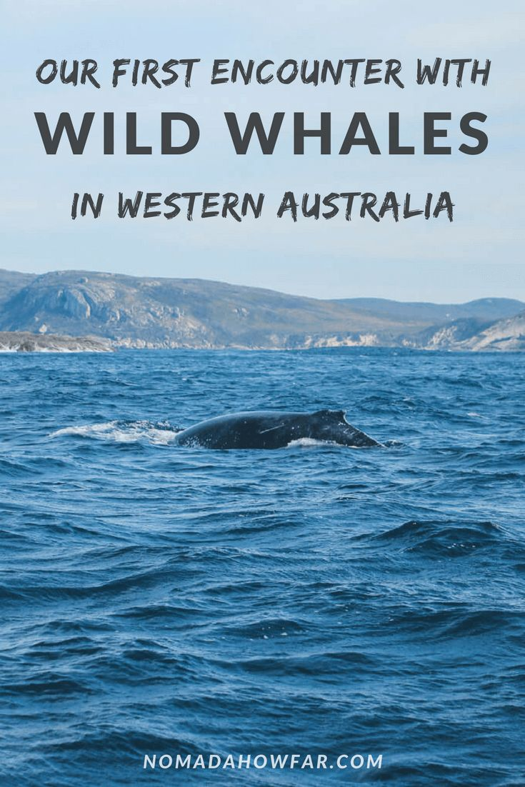 Our First Encounter With Wild Whales In Western Australia