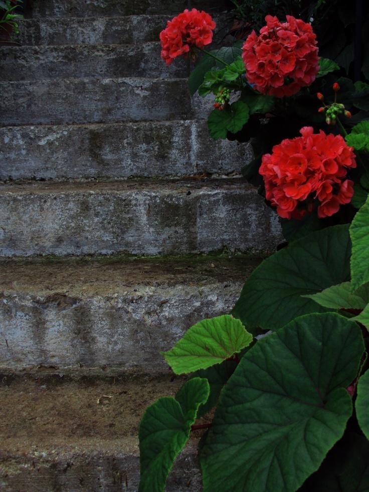 flowers,plants,rainy day