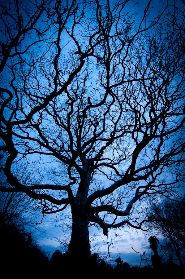 Photograph Tree silhouette by Andrew Walmsley on 500px