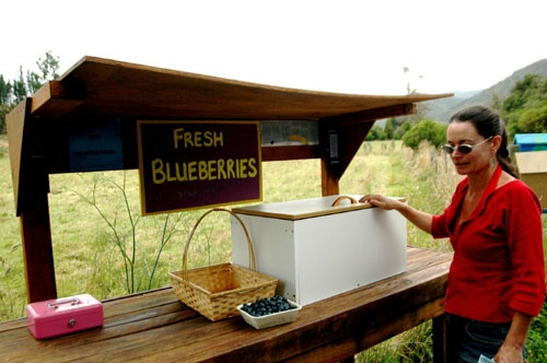 Blueberries at an honesty box sale