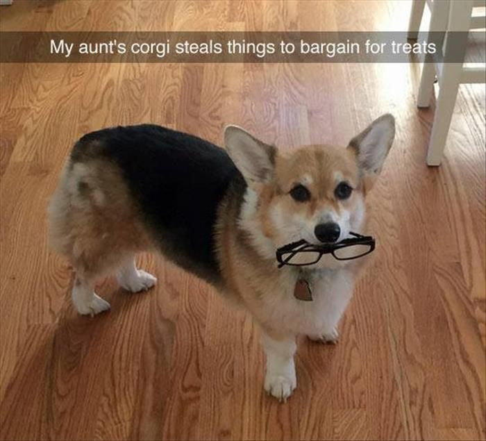 visit www.amazingdogtales.com for the best funny dog joke pics,inspirational dog stories and dog news.... Funny Pictures Of The Day – 51 Pics