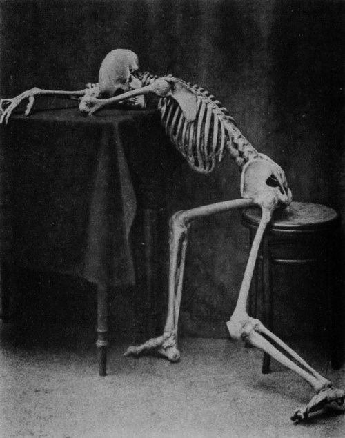 Ennui: Skull, Bones, Full Body, Art, Skeletons, Dark Side, Black Sheep, Interesting Photo, Halloween Pictures
