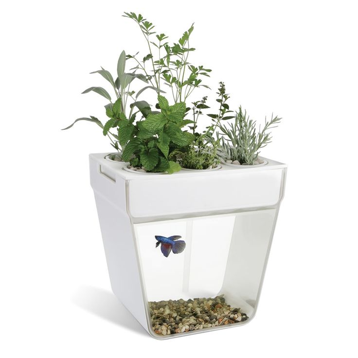 The aquaponic fish tank hammacher schlemmer 2015 for Fish used in aquaponics