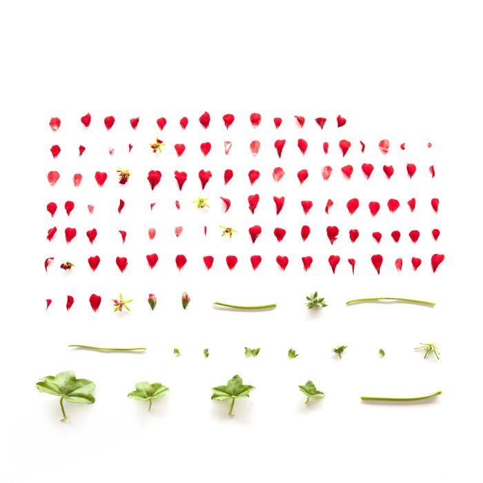 Sarah Blythe - Deconstructing Flora 2011