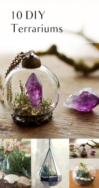 10 DIY Terrariums
