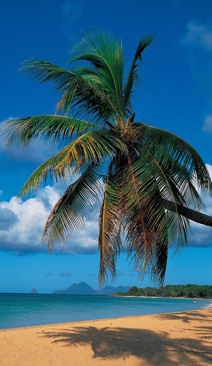 Grande Anse des Salines, Martinique