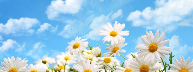 Скачать обои облака, цветы, природа, ромашки, раздел цветы в разрешении 3200x1200