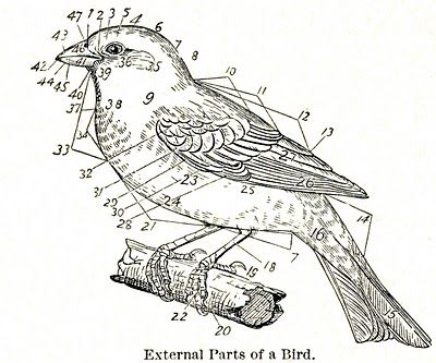 Free Vintage Clip Art - Dictionary Bird Images
