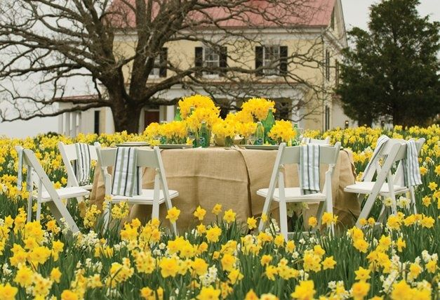 "p allan smith daffodills | Allen Smith's ""Daffodil Hill"" at the Garden Home Retreat. aymag ..."