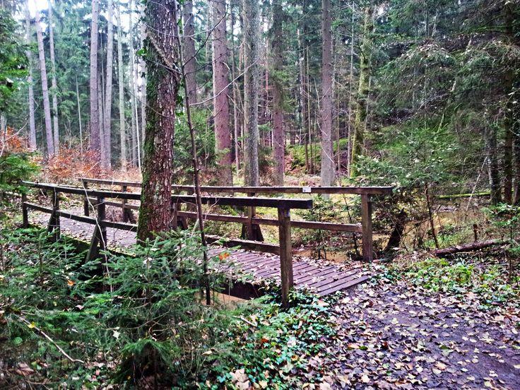 Röthenbachklamm | Rumpelbachschlucht allerhand Holzbrücken gilt es zu überqueren  #mtb #hike #hikeandbike #trail #franconia (fränkische Schweiz)