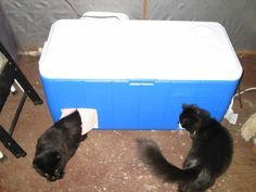 The Very Best Cats: Heating an Outdoor Cat Enclosure in the Winter
