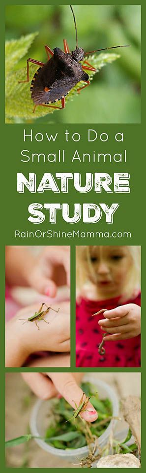 How to Do a Small Animal Nature Study