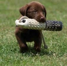 Puppy Training Tips - so far we are doing most of these.  Consistency and training ourselves seems to be the key!  ~Cindy