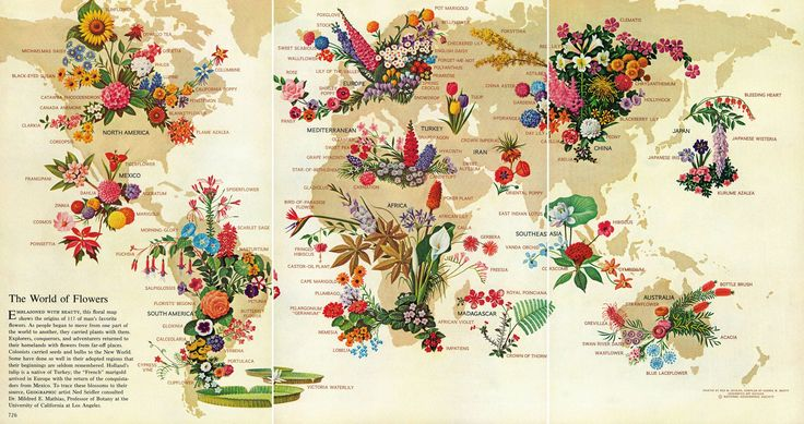 The World of Flowers, May 1968