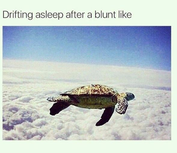 Like ➡️ Weed Humor for more!