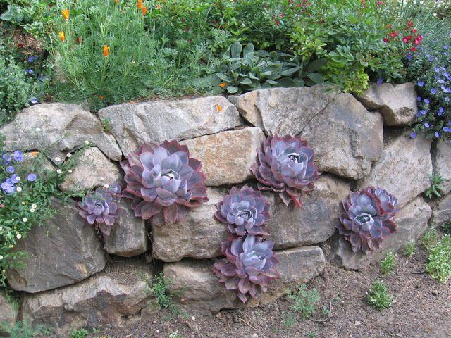 mini jardins pedra viva:Muros de Pedra