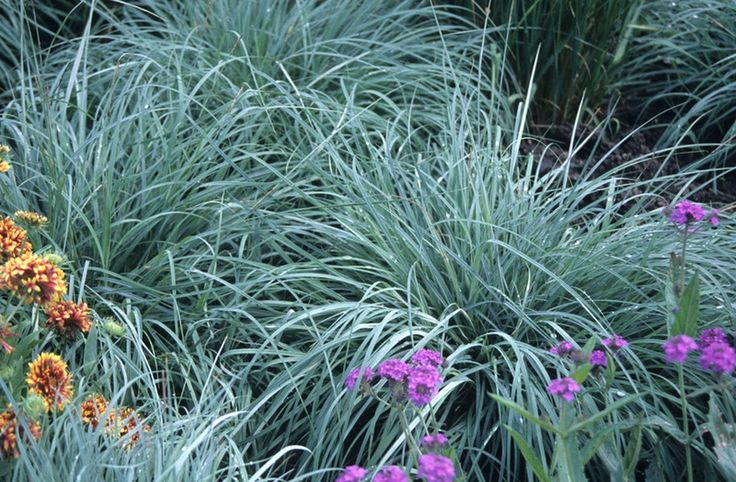 Sedges are a type of ornamental grass that grow well in moist soil and part of full shade