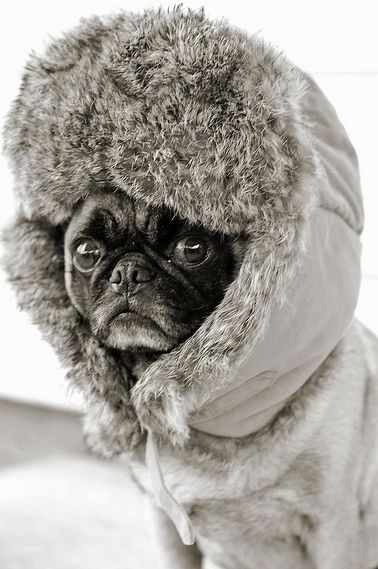 Network weather dog ready to go on assignment for the evening news. The blizzard is said to be in full force by then.