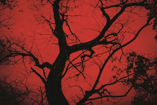 This suggest distorted nature because the tree looks fine, but the sky is red, suggesting that it could be dyed from the blood of Duncan. I think that this picture could be suggesting the darkness that fell over the land after Duncan was killed, but it is mirrored by Duncan's blood.