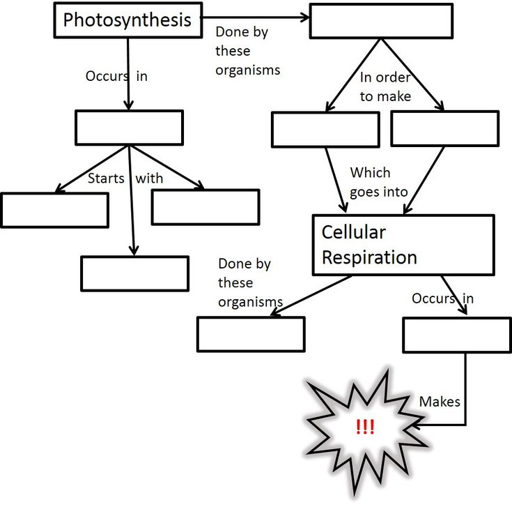 17 best images about bio unit 5 photosynthesis and cellular respiration on pinterest