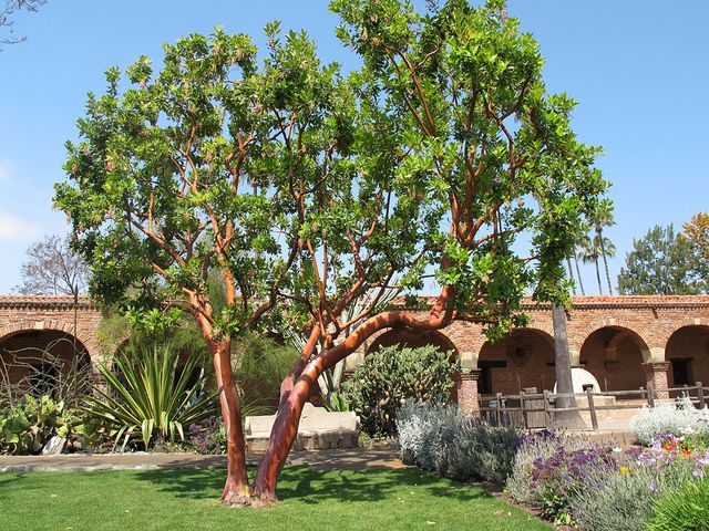 19 best images about deciduous trees on pinterest trees for Garden deciduous trees