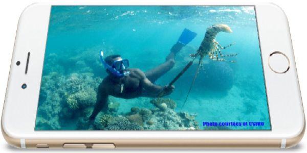 diver catching  a rockcrab a csiro photo in a GrahixCreator phone
