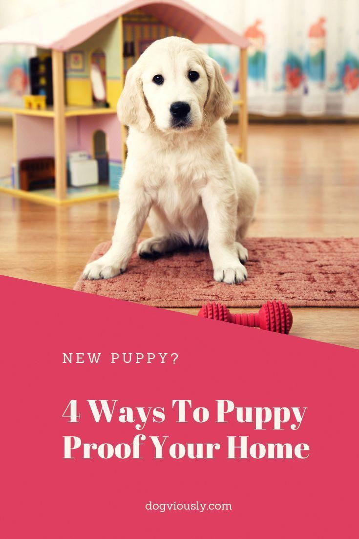 4 Ways To Puppy Proof Your Home New Puppy Dog Training Tips