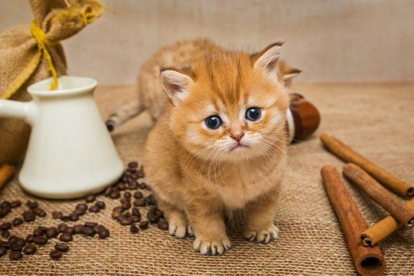 ล กแมวเหม ยว Cats Animals