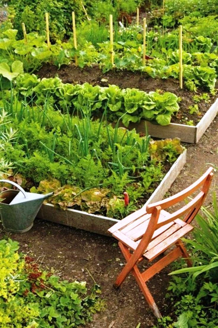 Top 10 tips on starting your own vegetable garden for Starting a vegetable garden