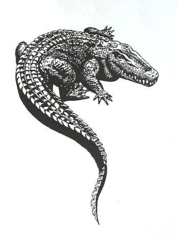Alligator Tattoo sketch Design                                                                                                                                                                                 More