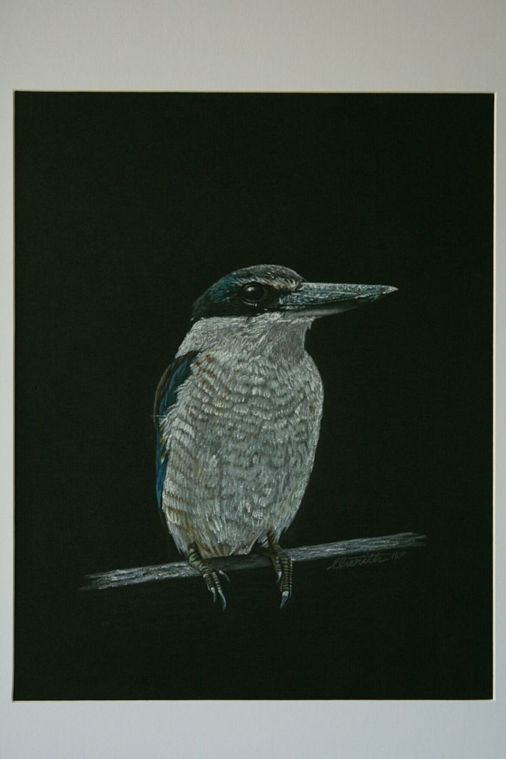 Kingfisher, NZ Native bird, Watercolour Pencil Drawing on Card, 300 x 420mm, by Cherith Curtis
