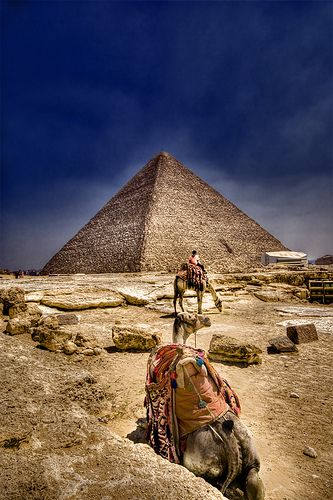 Pyramids and camels in Giza, Egypt