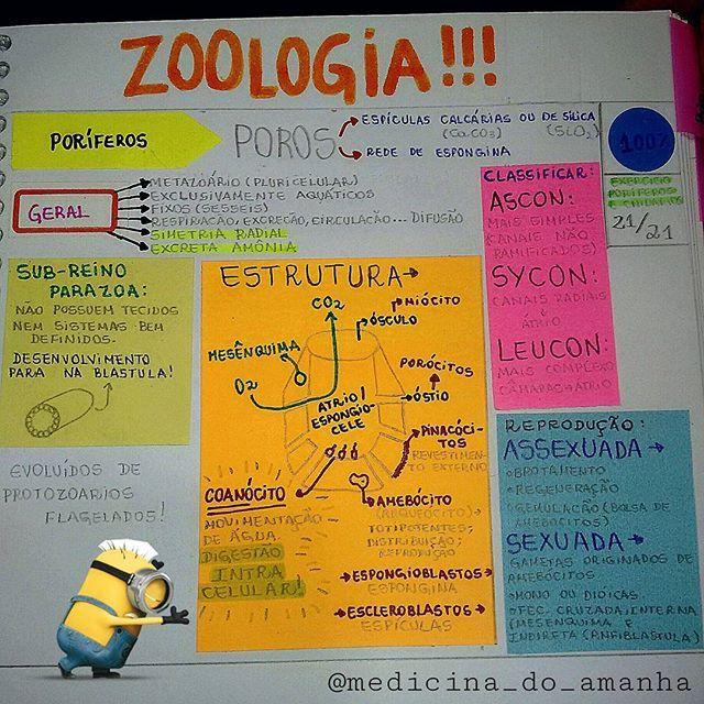 """#RESUMO #BIOLOGIA #ZOOLOGIA #PORÍFEROS <span class=""""emoji emoji2764""""></span><span class=""""emoji emoji2764""""></span><span class=""""emoji emoji2764""""></span> Tá mto difícil de ler, mas é só baixar lá no blog (RESUMOS ..."""