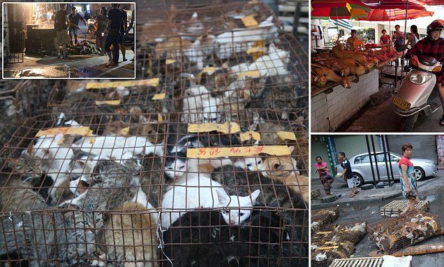 Shocking images of hundreds of cats due to be eaten at Yulin festival #DailyMail | See this & more at: http://twodaysnewstand.weebly.com/mail-onlinecom