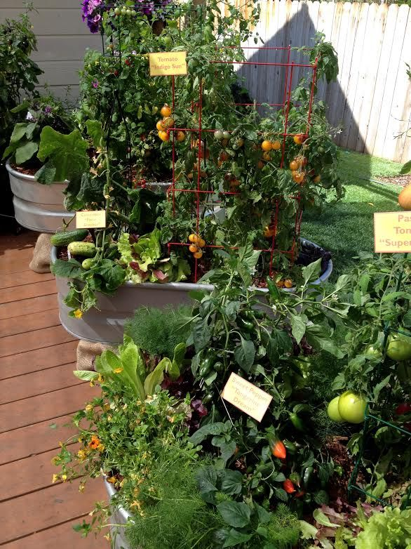 ... Grow An Entire Vegetable Garden In Containers On Our Patio. She Plants  A Wide Variety Of Veggies, Such As Tomatoes, Cucumbers, Eggplants, And  Peppers.