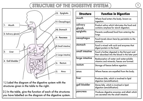 Gcse Digestion Topic Resource Pack Updated