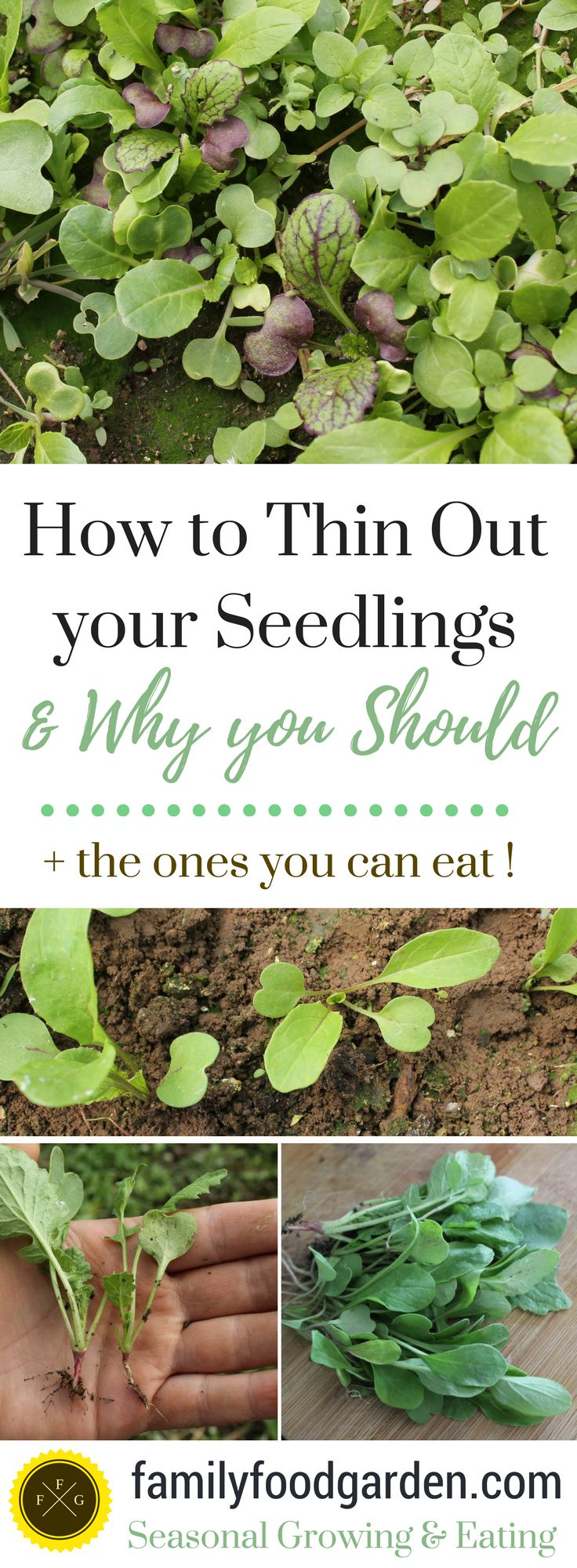 How to Thin out your Crops for Healthier Plants