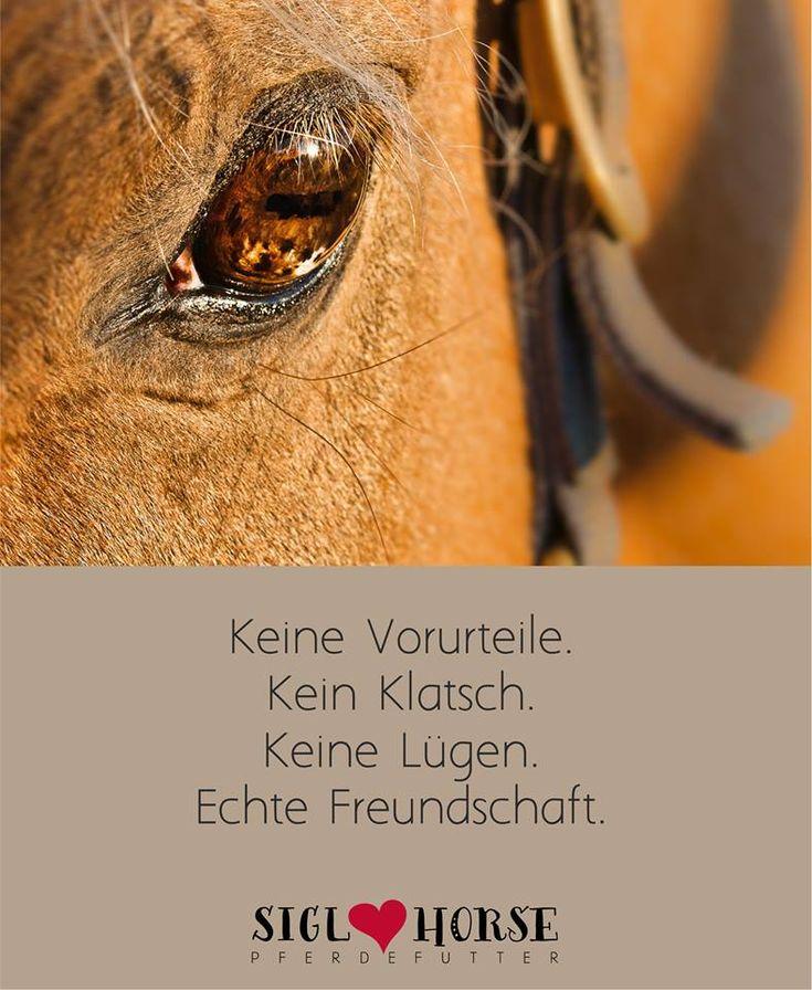 Wunderschöne Sprüche und Pferdewahrheiten!