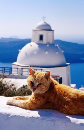 A cat enjoying the Santorini sun , Greece