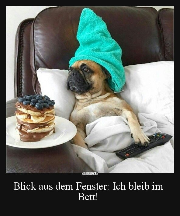 Notitle Lustige Bilder Lustigebilder Notitle Cute Dogs Funny Animal Pictures Funny Animals