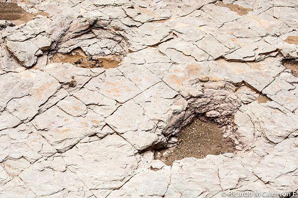 Mexican Landscapes: Zapotitlan  Sn Juan de la Raya, Puebla, Between Cactus, Stars and Fossils (Dinosaur footprints)