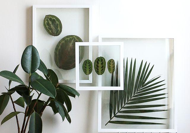 Pressed Plants 2