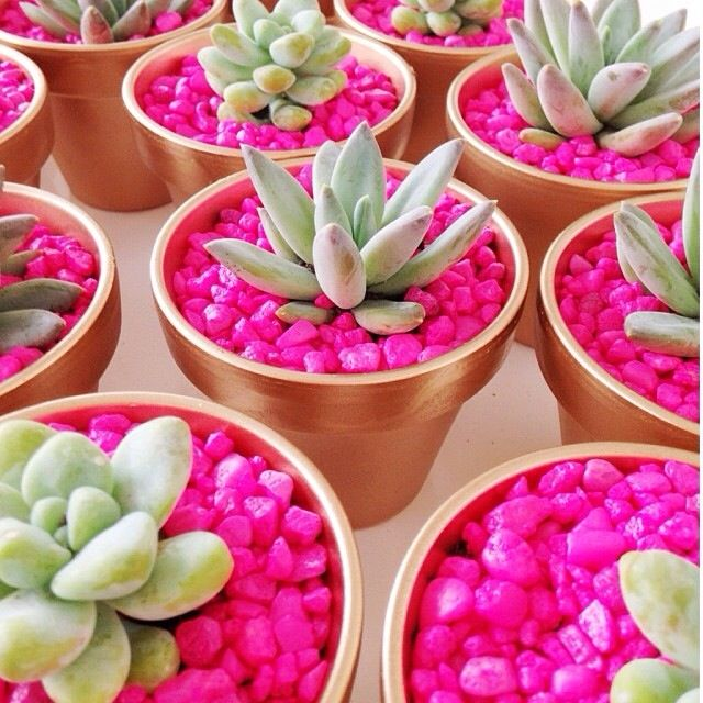 Hot pink aquarium rocks for planting succulents. So cute and easy and inexpensive :)