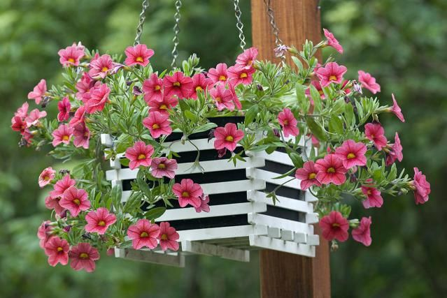 Would you like an annual flower that blooms nonstop without the need for deadheading? Million bells are prolific bloomers that attract hummingbirds.