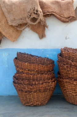 CHUAO, VENEZUELA - cacao harvesting baskets. Art Pollard, Amano Chocolate