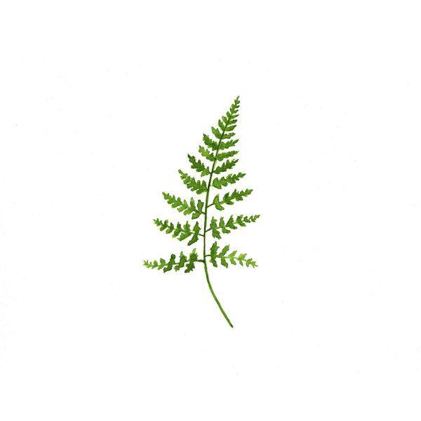 Fern - Original Watercolor Painting - Botanical Art - Woodland Decor ($25) found on Polyvore